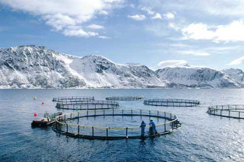 Norvegia: la patria del Salmone che piace agli italiani
