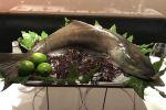 Pesce Cobia: dai Caraibi il futuro protagonista delle tavole italiane