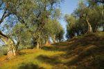 Umbria, torna il Salone del Turismo Rurale