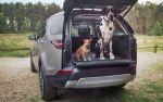 Animali: Come viaggiare in auto con Fido al sicuro