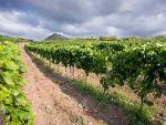 Profumi, sapori e colori di Sicilia nei vini vulcanici